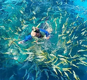 Fish in ocean swimming